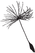 dandelion seed for logo