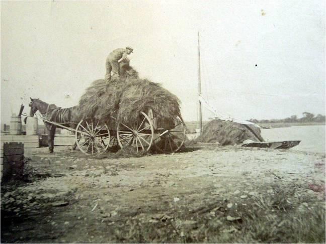 Harvesting Salt Hay